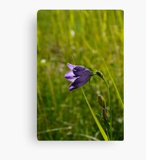 Spring Bell Canvas Print