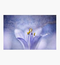 The Blues  Photographic Print