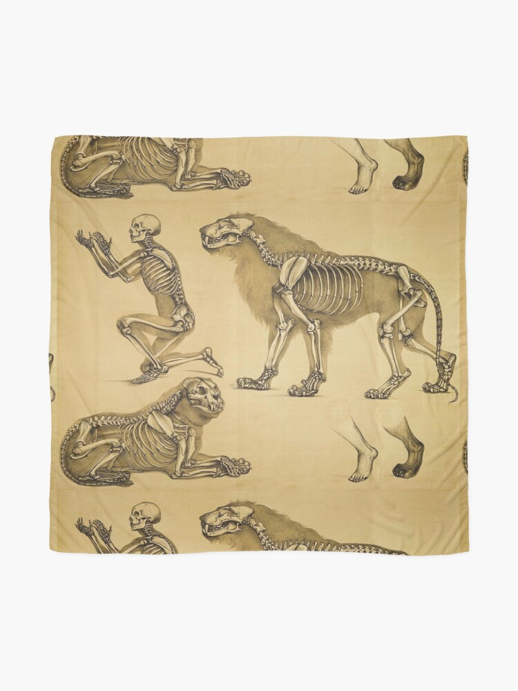 Alternate view of The skeletons of man and big cat compared Scarf
