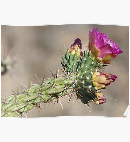 Tree Cactus Bloom Poster