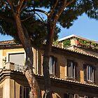 Gallivanting in Rom Italien - Signature Umbrella Pine und Attico con Terrazzo von Georgia Mizuleva