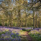 A Walk in the Bluebell Wood by Jim Key