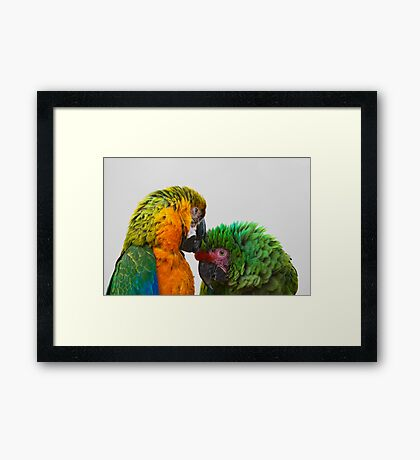 Macaw Bird Green and Yellow Color Framed Print