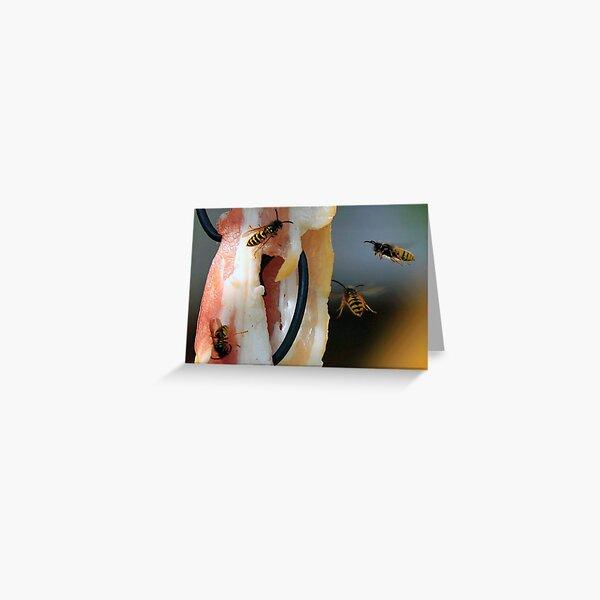 Flying Wasp 0002 Greeting Card