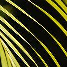 Palm Lines by Catherine Davis