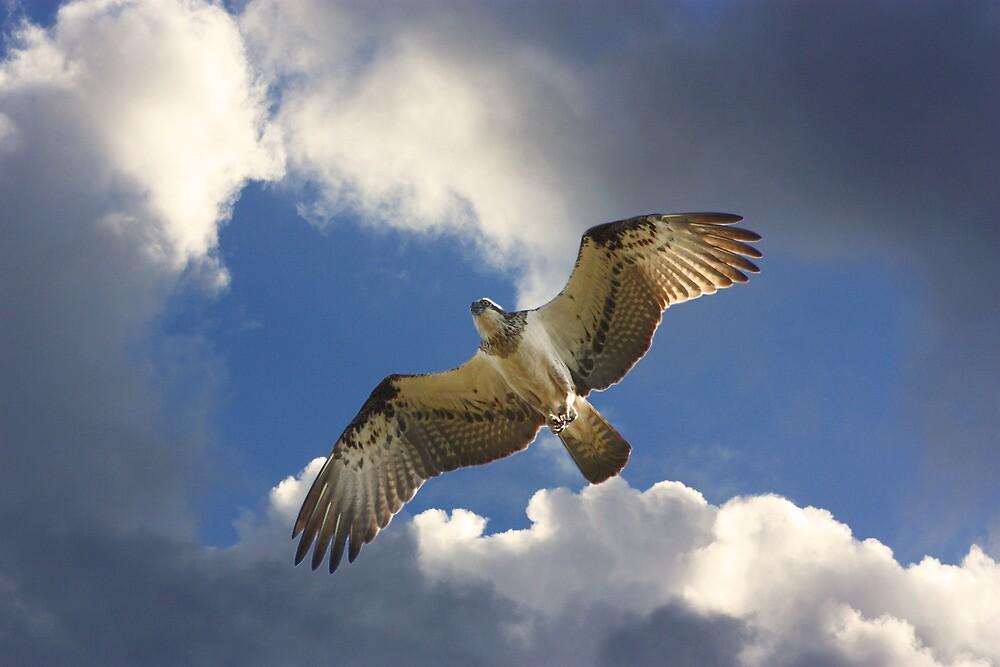 Reaching for the Heavens by byronbackyard