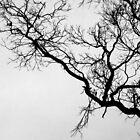 Der tote Baum von metriognome