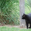 Country Cat by Suz Garten