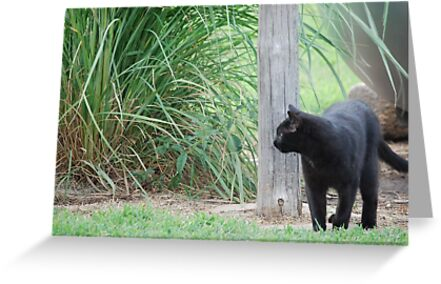 Country Cat by Suz Garten
