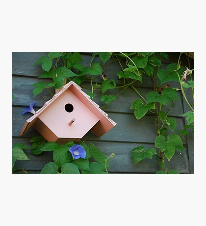 Birdhouse with Morning Glories Photographic Print