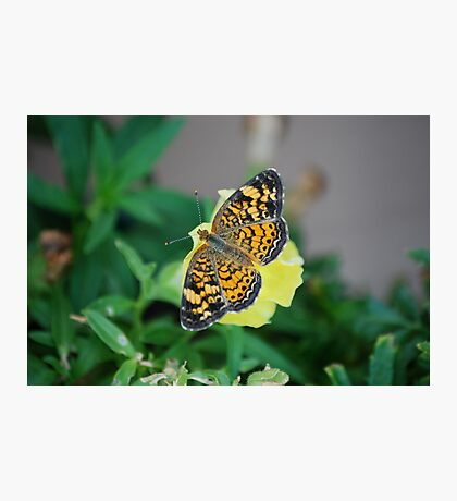 Butterfly on Snapdragon Photographic Print