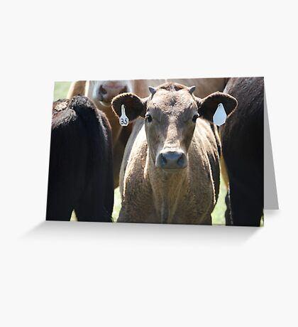 Inquisitive Cow Greeting Card