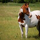Paint Horse in Repose by Suz Garten