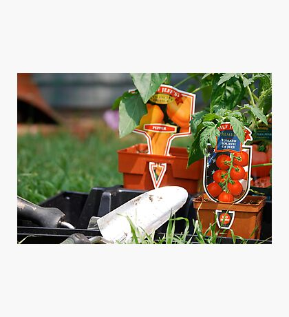Vegetable Planting Time Photographic Print