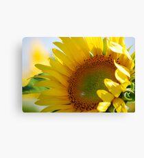 Kansas Sunflower Canvas Print