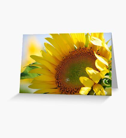 Kansas Sunflower Greeting Card