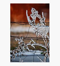 Ice on Weed Photographic Print