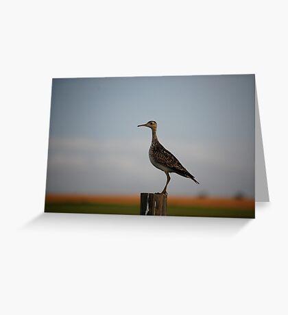 Upland Sandpiper in Kansas Greeting Card