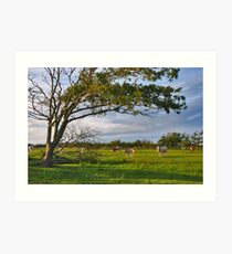 The cows and the tree.... Art Print