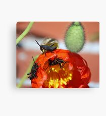 Grass Hoppers Canvas Print