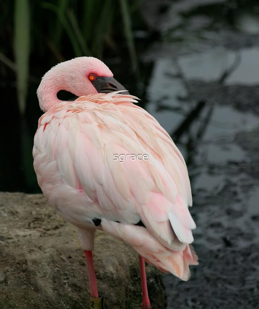 Flamingo by Sarah Grace
