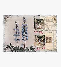 Kitty Kitty Hard Journal Cover Photographic Print