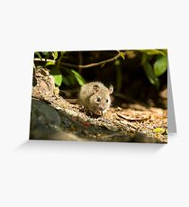 wood mouse Greeting Card
