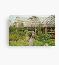 flower plantation Canvas Print