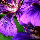 Purple Petals by BevsDigitalArt