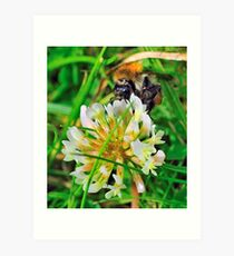 Bee On Flower 0040 Art Print