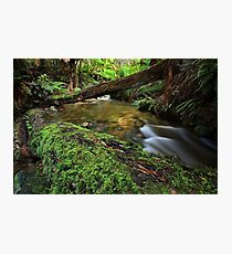 """""""From the Log"""" Photographic Print"""