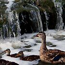 Duckie Bubble Bath by R&PChristianDesign &Photography