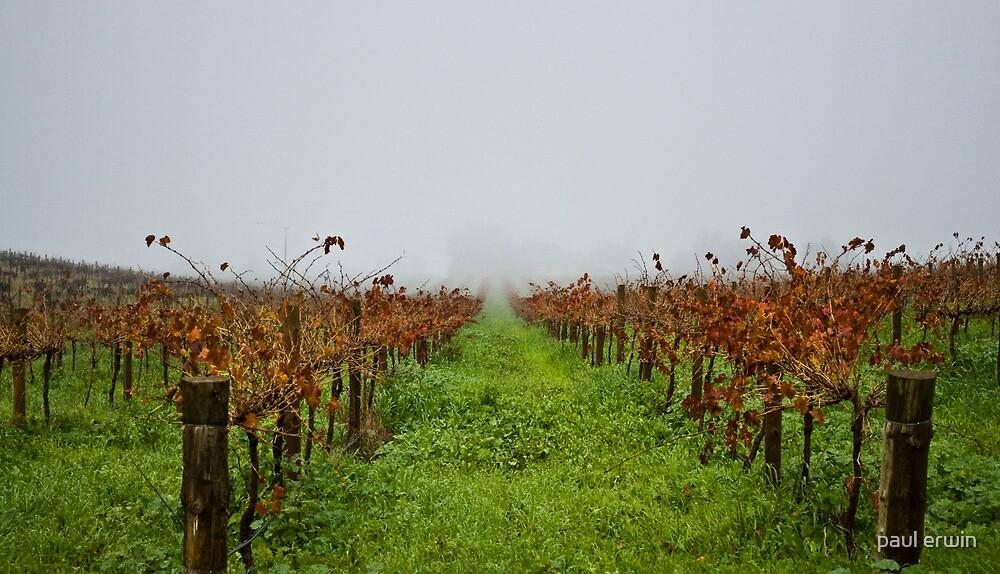 misty vines by paul erwin