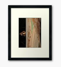 Butterfly, Melbourne Zoo 2010 Framed Print
