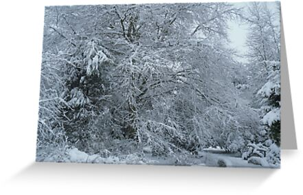 Deep Snow in the Park by Kyleacharisse