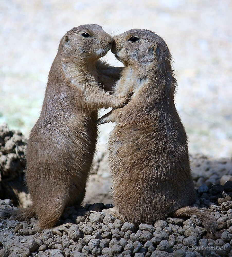 Prarie Dog Love by Paulette1021