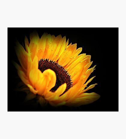 Yellow Sunflower. Photographic Print