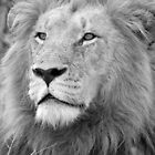 Portrait of a King of the Bush! by Anthony Goldman