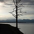 Tree on Yellowstone Lake by MikeDAdams