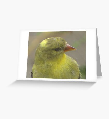 Bird that wanted in my house Greeting Card