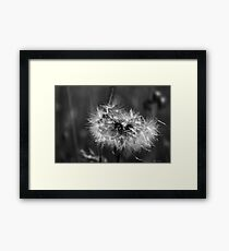 As they fly away Framed Print