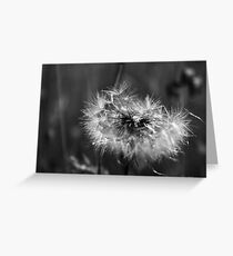 As they fly away Greeting Card