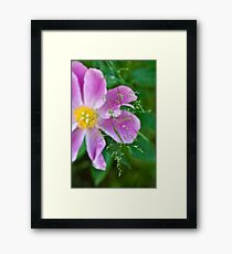 Peony and Straw of Grass Framed Print