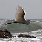 White in Flight Two by Tom Deters