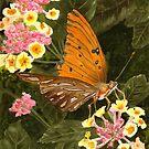 Butterfly on Flower by Anne Sainz