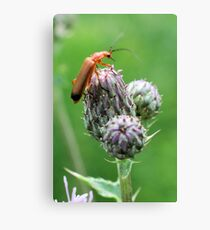 Insect on flower 0001 Canvas Print