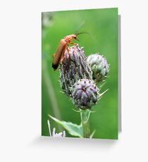 Insect on flower 0001 Greeting Card