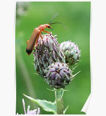 Insect on flower 0001 Poster