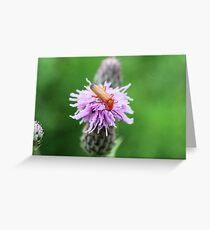 Insect on flower 0003 Greeting Card
