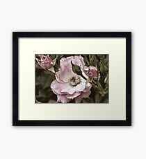Roses are Pink Framed Print